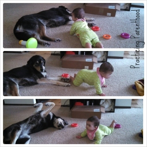 Puppy and Baby Games